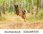 happy german shepherd running... | Shutterstock . vector #320189555