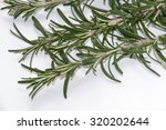 twigs of rosemary on a white...   Shutterstock . vector #320202644