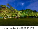 Beautiful tree in the park at night - stock photo