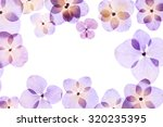 pressed flower  hydrangea   Shutterstock . vector #320235395