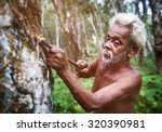 Sri Lankan Man Tappting Rubber...