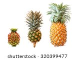 pineapple isolated on a white... | Shutterstock . vector #320399477