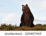 brown bear on the hill with... | Shutterstock . vector #320407445