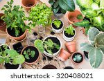 natural plants in pots  green... | Shutterstock . vector #320408021