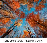 Autumn Forest. Trees Pattern....