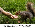 funny cute squirrel is eating... | Shutterstock . vector #320619029
