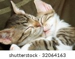 Stock photo two sleeping striped kittens 32064163