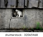 Stray wet kittens in abandoned building - stock photo