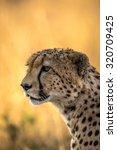 Cheetah Profile In Tanzania ...