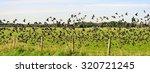 flock of birds flying up  | Shutterstock . vector #320721245