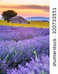 valensole plateau  lavender and ... | Shutterstock . vector #320733551