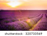 provence  lavender field at...   Shutterstock . vector #320733569