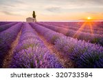 provence  lavender field at... | Shutterstock . vector #320733584