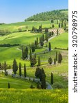 road with curves and cypresses... | Shutterstock . vector #320798975