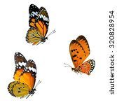 Stock photo set of beautiful flying butterflies plain tiger common tiger and tawny coster isolated on white 320828954