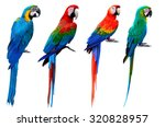 Collection Of Macaw Birds  Blue ...