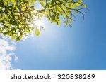 green leaves against blue sky | Shutterstock . vector #320838269