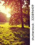 meadow with tree in the morning | Shutterstock . vector #320896409