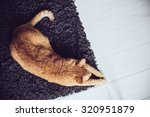 big ginger cat lying on a... | Shutterstock . vector #320951879