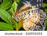 close up of painted lady ... | Shutterstock . vector #320953355