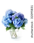 Isolated Blue Hydrangea Flower...