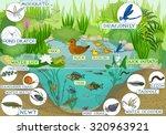 ecosystem of pond   Shutterstock .eps vector #320963921