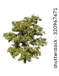 tree isolated on white... | Shutterstock . vector #320967671