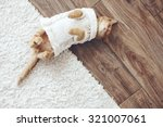Stock photo cute little ginger kitten wearing warm knitted sweater is sleeping on the floor top view point 321007061