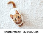 Stock photo cute little ginger kitten wearing warm knitted sweater is sitting on white carpet top view point 321007085