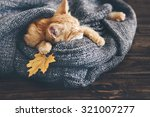 Stock photo cute little ginger kitten is sleeping in soft blanket on wooden floor 321007277