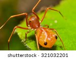 ant mimic spider in nature soft ... | Shutterstock . vector #321032201