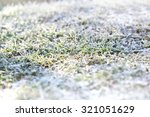 First Snow On Green Grass ...
