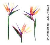 Rainbow Watercolor Bird Of...