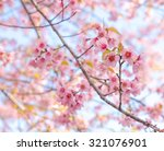 background of beautiful pink... | Shutterstock . vector #321076901