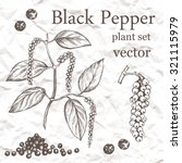 Black Pepper Plant Set. Hand...