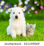 Stock photo white swiss shepherd s puppy and kitten sitting together on green grass 321149069