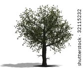 rendering of a tree with shadow ... | Shutterstock . vector #32115232