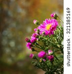 Small photo of Autumn background with bush alpine aster