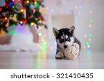 Dog Breed Siberian Husky Puppy...