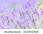 Abstract Lavender Closeup In...