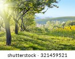 sunny countryside landscape at... | Shutterstock . vector #321459521