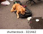 Sleeping Dog On A Guitar Case...