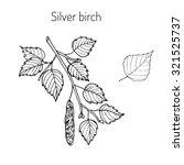 silver birch branch with green...   Shutterstock .eps vector #321525737