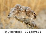 Little Owl's Family Portrait