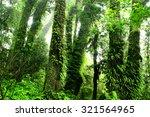 rainforest at inthanon mountain ...   Shutterstock . vector #321564965