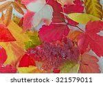 bright red and orange autumn... | Shutterstock . vector #321579011