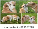 Stock photo set of photos about friendship ginger cat and dog 321587309