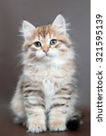 Stock photo siberian kitten 321595139