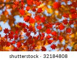 fall contrasts 7 | Shutterstock . vector #32184808