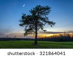 a lone pine tree and crescent... | Shutterstock . vector #321864041